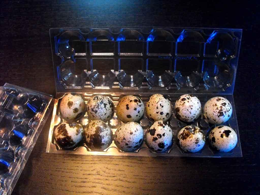 cofraje plastic 12 oua prepelita, cofraje plastic 12 oua
