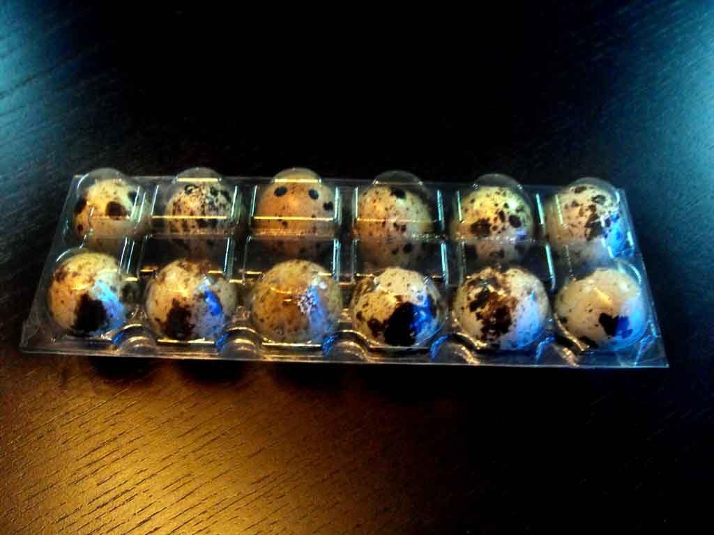 cofraje plastic oua prepelita, cofraje plastic oua