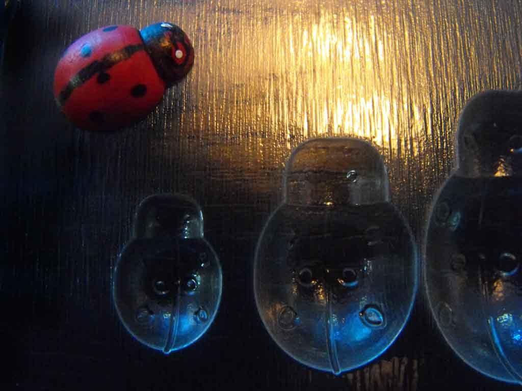 forme plastic turnat ciocolata, forme plastic gargarite