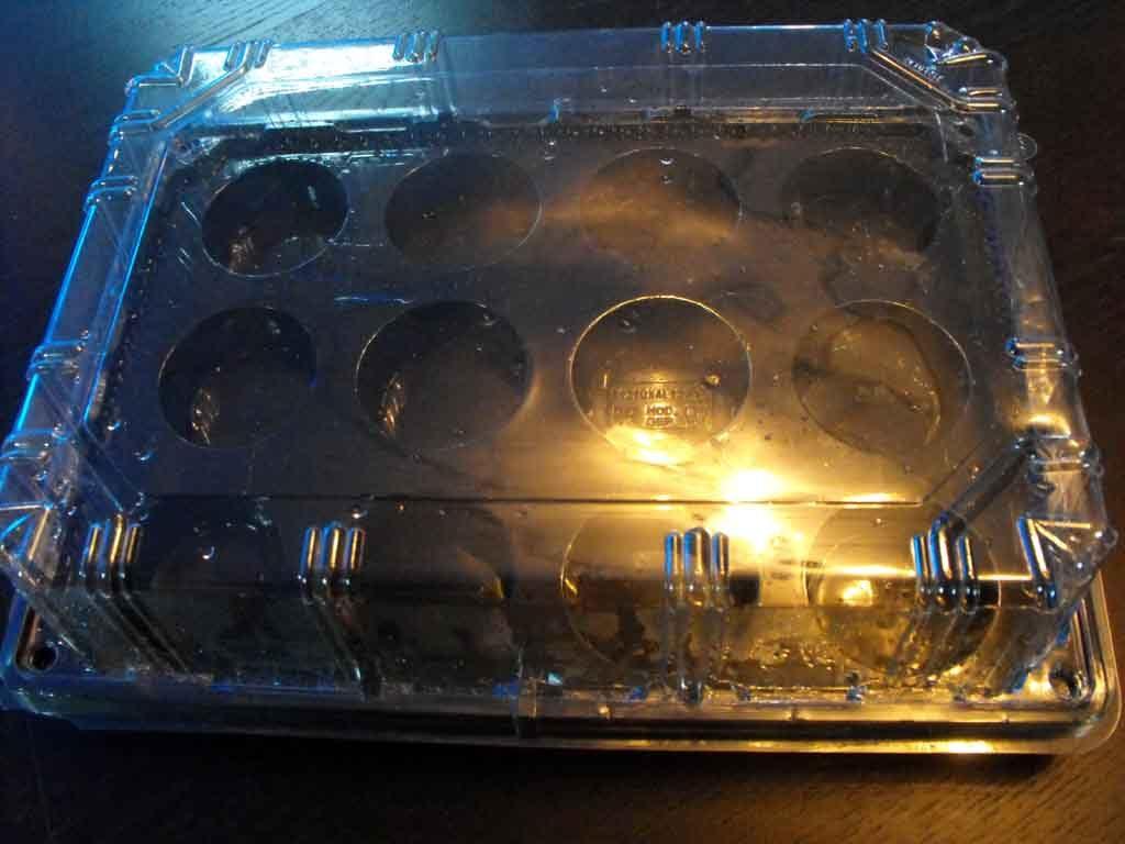 tava cu capac transport muffins